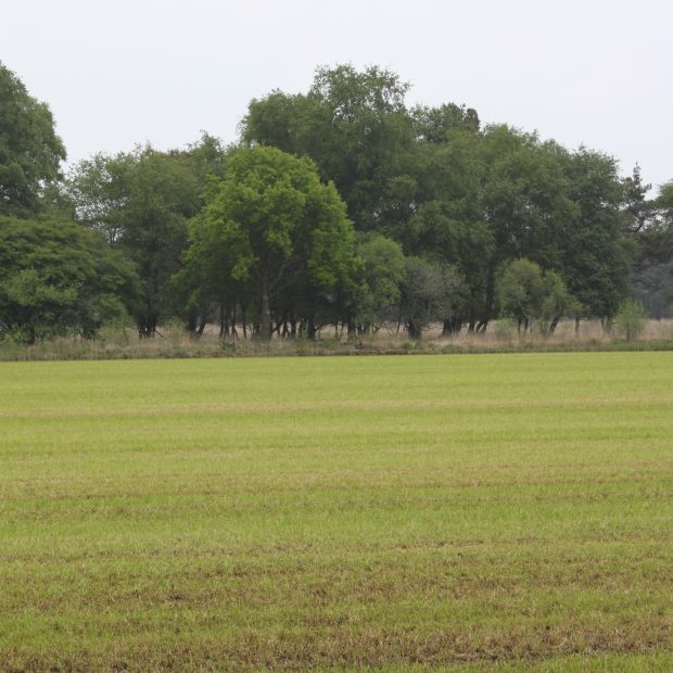 Gebiedsontwikkeling Boetelerveld