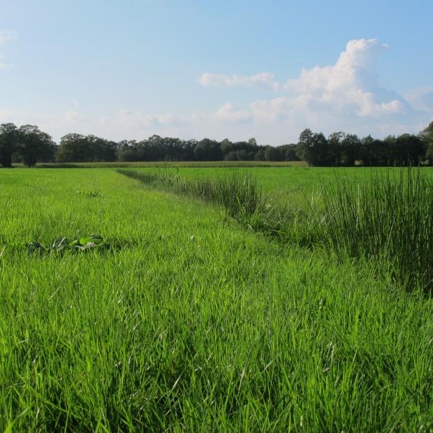 Ecologische Verbindingen Drenthe